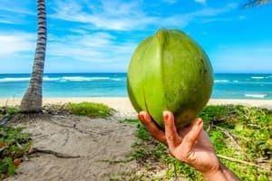 Kokossocker kokosnöt